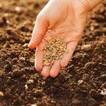Le mani sporche di terra – L'orto collettivo