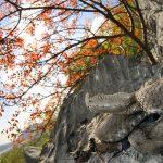 Amare la Natura e fotografarla – Marco Colombo, fotografo naturalista