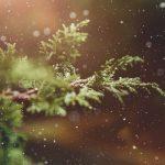 Regali per Natale 2020: felicità pensando alla sostenibilità